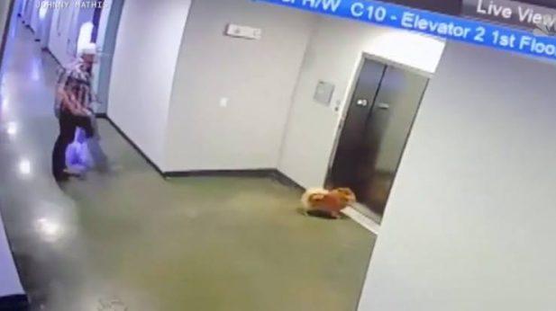 Super-herói da vida real! Vídeo angustiante mostra homem salvando cão da vizinha que ficou preso com a guia em porta de elevador: 'Estou tremendo!'; Assista
