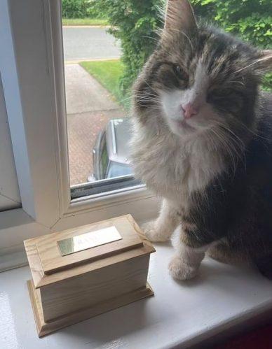 Gato Frankie