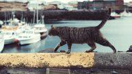 Gatos Sumiço